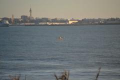 Bahía de Cádiz en octubre