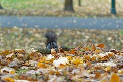 Squirrel #1 - Hide and seek