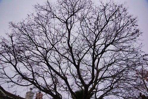 2018-12-09 - Where are the leaves