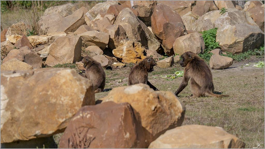 Terre des singes part4 30068052117_6ddcc94924_b