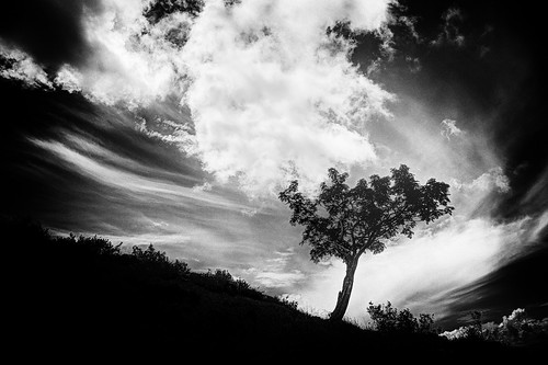 Lonely tree against cloudy sky