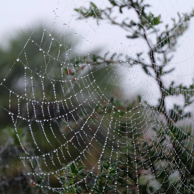 October spiderweb