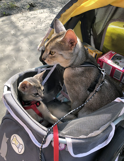roryfreddy-stroller_3281