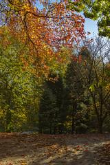 Autumn in St Fagan's
