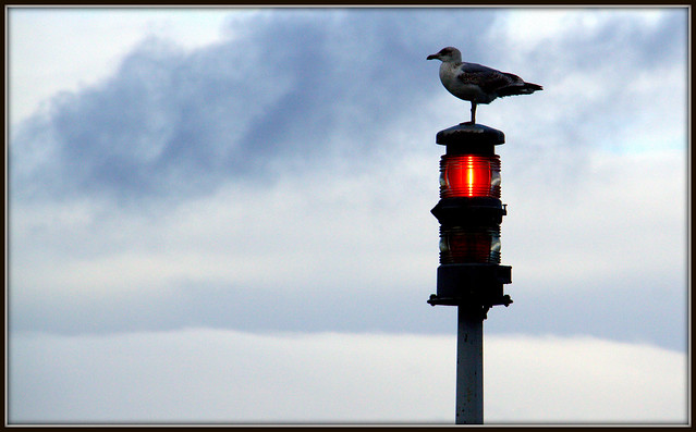 Redlight, Canon EOS 50D, Canon EF-S 18-200mm f/3.5-5.6 IS