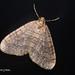Kitchen Moth!    PB131778sm