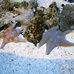 Starfish Newport Aquarium