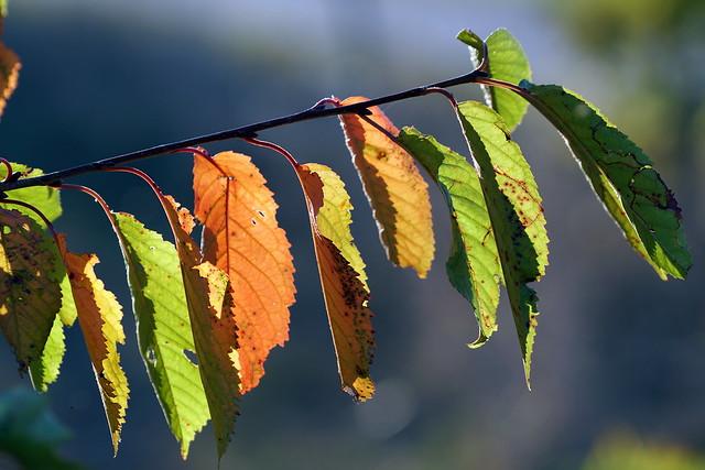 Herbstfarben, Sony ILCE-6500, Sony FE 70-200mm F4 G OSS