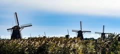 The Netherlands オランダ