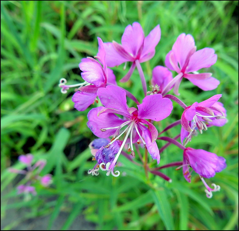 Касарги 8765 Flores