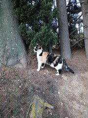 IMG_20180916_083400 - Photo of Montner