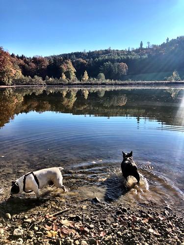Golden autumn at the lake… #Autumn #Lake #Doggies #HaveFunWithDoggies #IPhoneXPicture# DigitalNomad