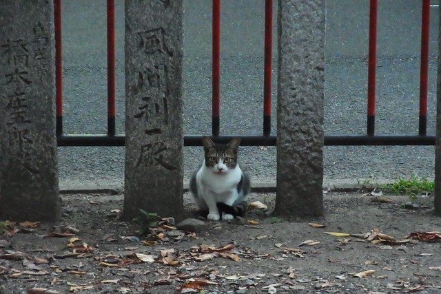 Today's Cat@2018-10-15