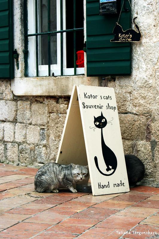 Коты возле сувенирной лавки