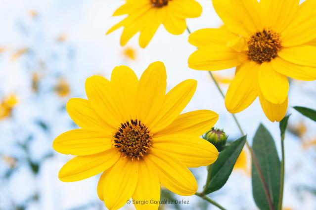 HashTags beautiful bloom blooms, Pentax K20D, A Series Lens