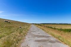Fahrradweg auf Ameland