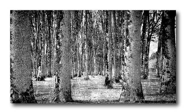 DAY 283. Trees in monochrome