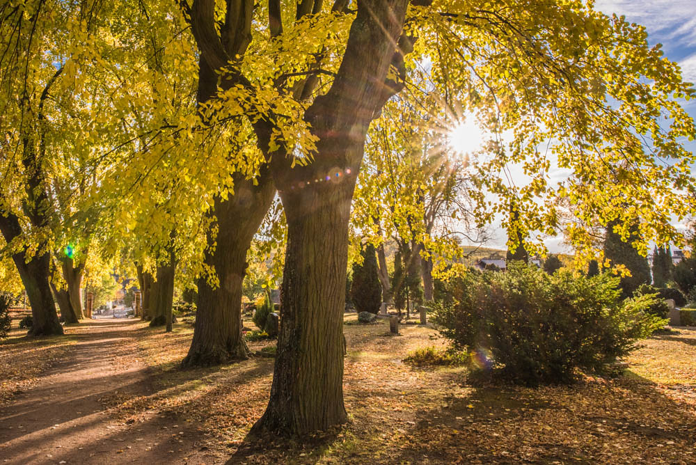 Herbst_Alter_Friedhof_028