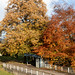 Autumn 2018 in south London   Crystal Palace-55