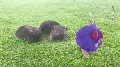 048 Venonat (position=right)