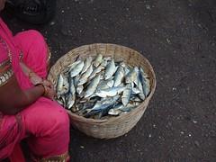 Salt fish mackerels