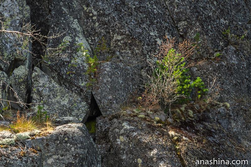 Растительность на скале, остров Каарнетсаари, Ладожское озеро