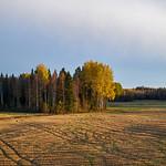 Joensuu to Helsinki from trains (Autumn)