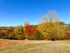 culori de toamnă/autumn colors