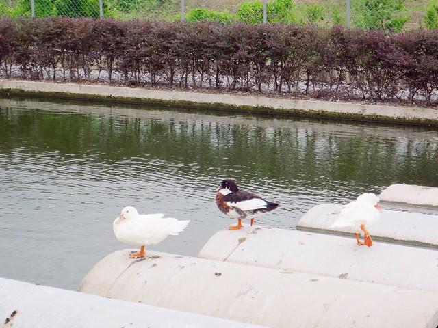 甲鳥園25