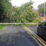 Photo of a fallen tree in Ashton, Preston after last weeks storm
