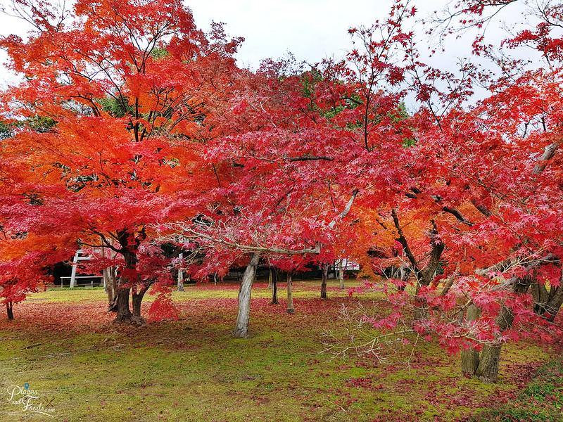 okayama korakuen autumn trees