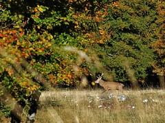 Brame de Cerf... Deer slab... #darktable #FujiX-S1