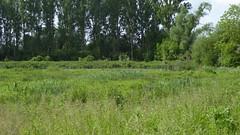 Site naturel du marais des crétes d'Athies (2)