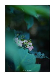 2018/9/23 - 3/18 photo by shin ikegami. - SONY ILCE‑7M2 / Carl Zeiss C Sonnar T* 1.5/50 ZM
