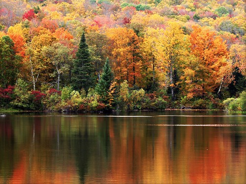 Autumn Colors | Sugar Hill, NH