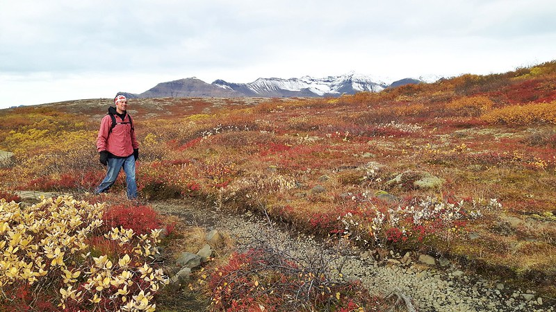 Terry walking through Thingvellir National Park with fall colours and snow-capped mountains