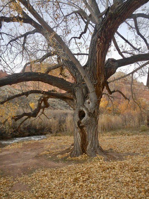 Spirit Tree, Nikon COOLPIX AW100