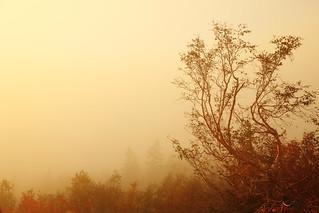 In dense fog
