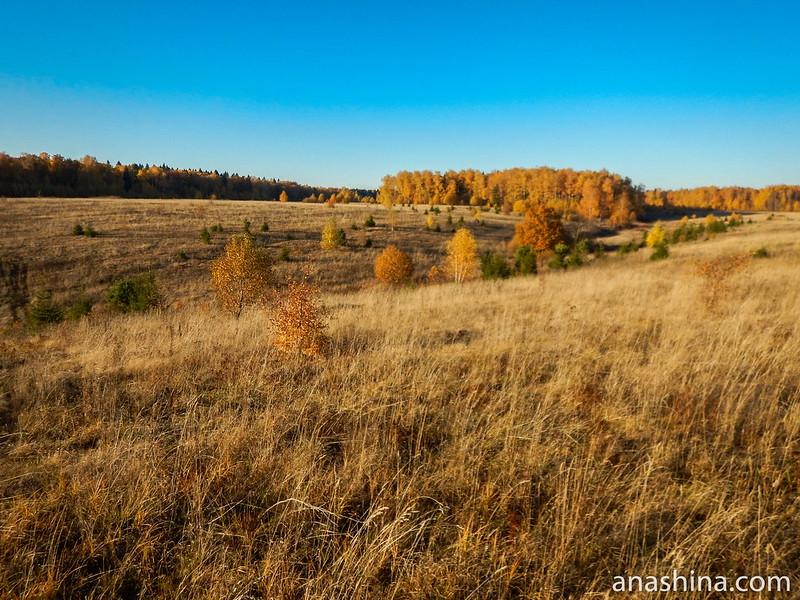 Протасовское поле, Московская область, Протасово