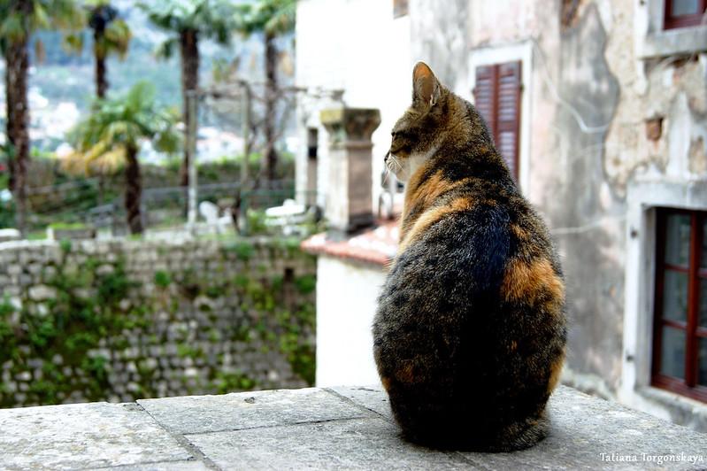Кот возле ворот Гурдич