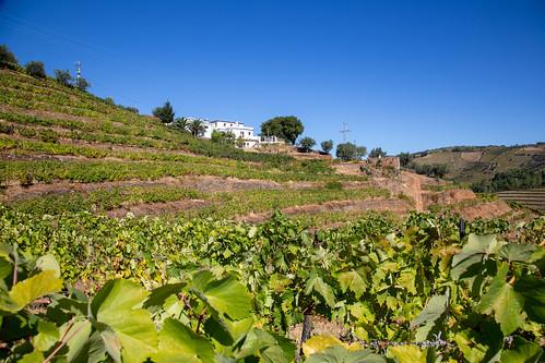 Looking back at Quinta dos Corvos
