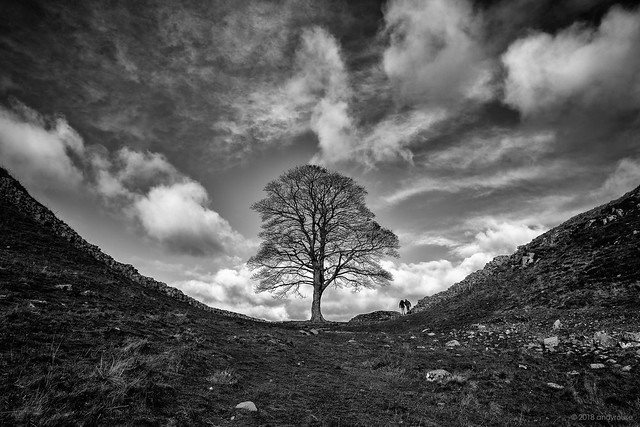Sycamore Gap (Explore late entry 31/10/18 #1)