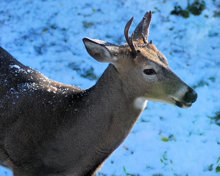 2018-10-09.deer4
