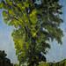 Grand Old Tree (2004)