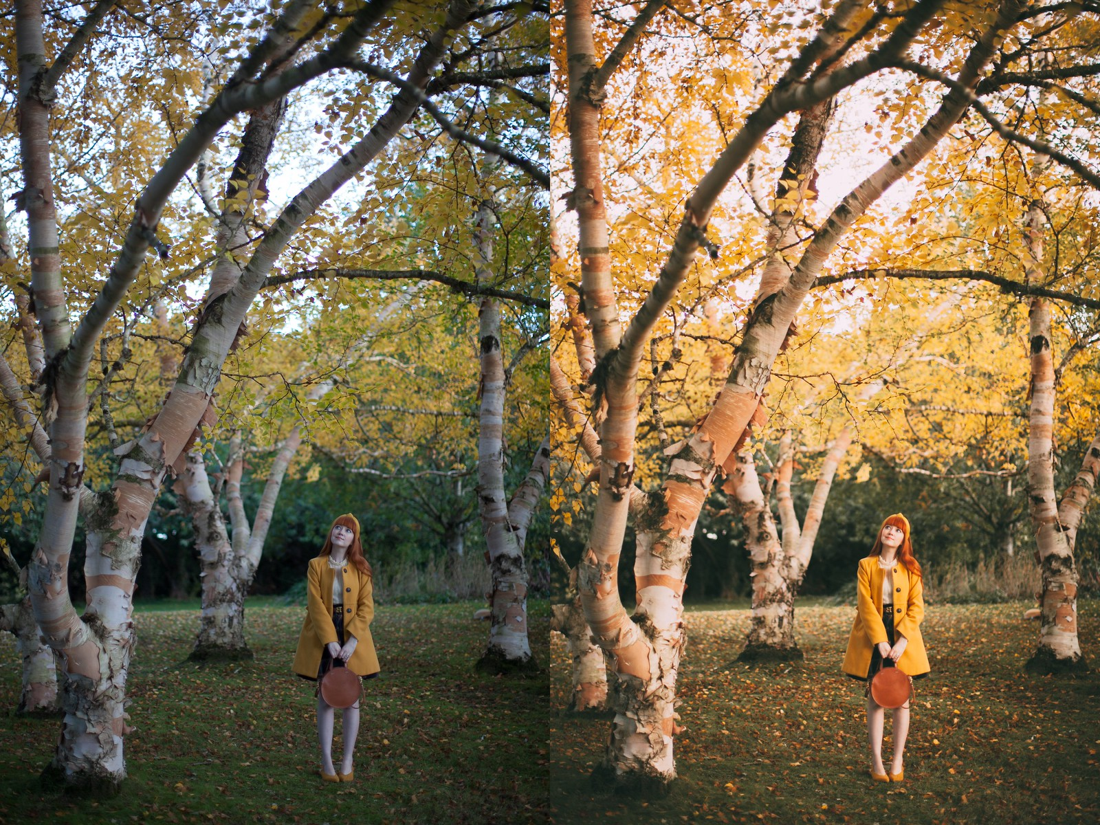 birches before and after