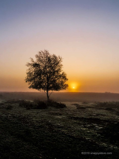 Foggy sunrise  Ibsley Common