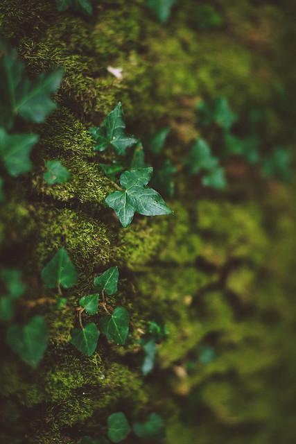 Mood at a tree
