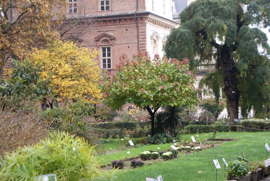 Vue sur le jardin botanique de Turin.