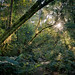 Forest Light by Panorama Paul
