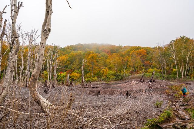 火山有毒ガスで朽ちた樹木
